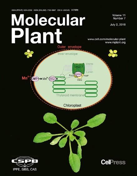 molplant
